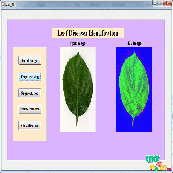 How deep learning extracts and learns leaf features for plant classification